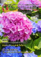アイウエオーディオ倶楽部2015年6月号(Vol38)